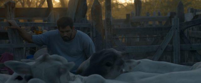 Film Neonový býk (2016) online ke shlédnutí.